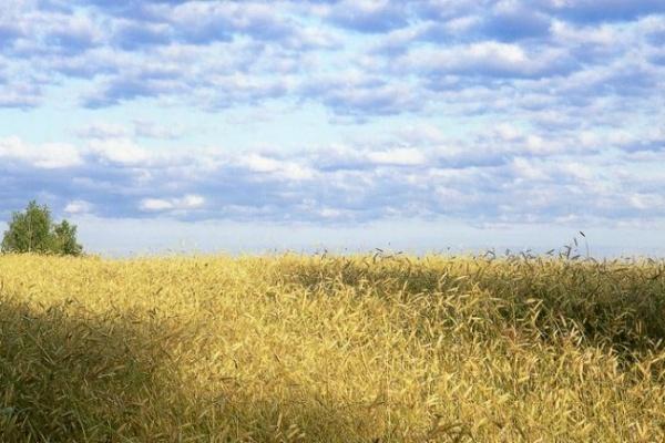 В Воронежской области 30 гектар земли обработали опасным пестицидом