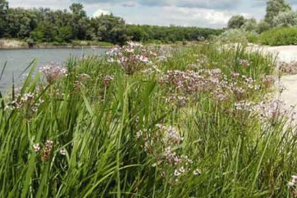 Роспотребнадзор просит воронежцев не купаться в окрестных речках, несмотря на удушающую жару