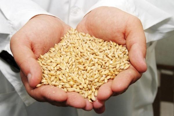 В Воронежской области собран первый миллион тонн зерна