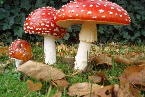 Делу об отравившихся грибами подростках в Воронежской области дали ход