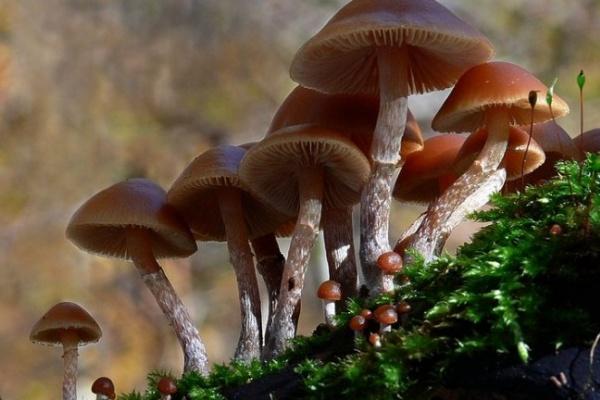 В Воронежской области введен запрет на торговлю дикорастущими грибами