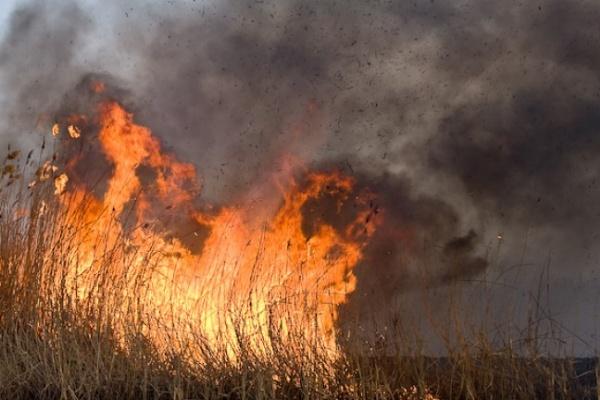 Вместе с жарой в Воронеж вернулись природные пожары