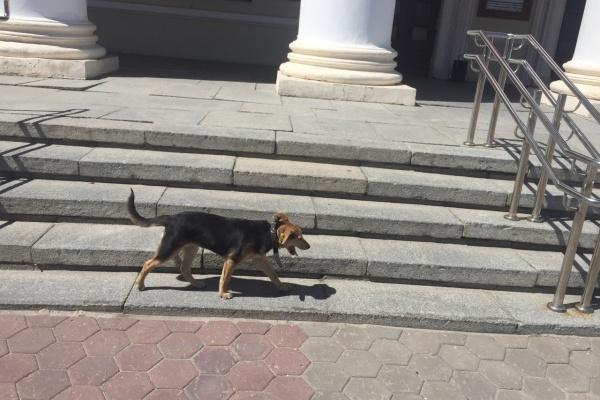 В Воронежской области законодательно изменили отношения с бездомными животными