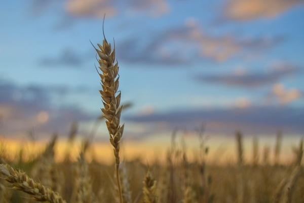 Алексей Сапронов официально возглавил департамент аграрной политики Воронежской области