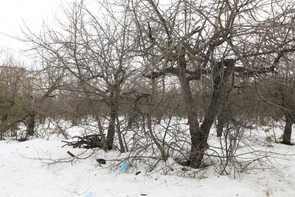 В Воронеже девелоперы поборются за землю у яблоневых садов