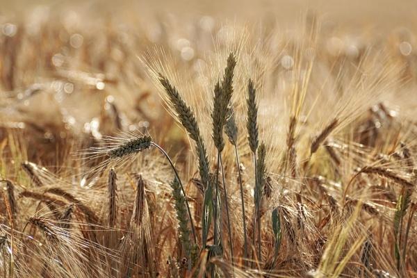Воронежским аграриям добавят 1,2 млрд рублей из федбюджета