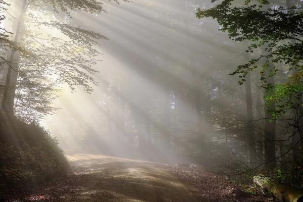 В Воронеже создадут природный парк «Репнинский лес»