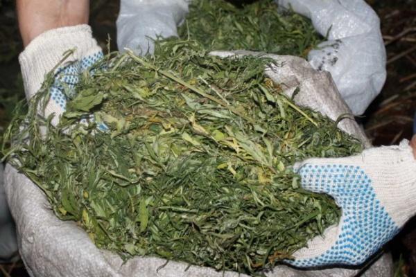 У воронежцев изъяли почти 50 кг марихуаны