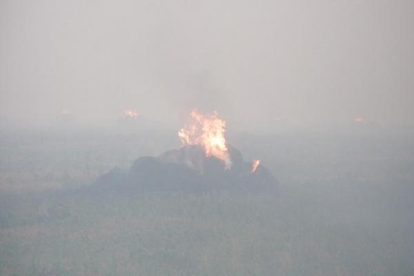Из-за аномальной жары в Воронежской области горят сухая трава и стерня