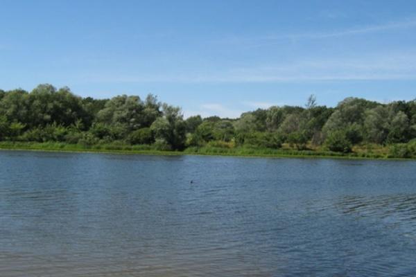 В Воронежской области муж, спасая жену, утонул и сам