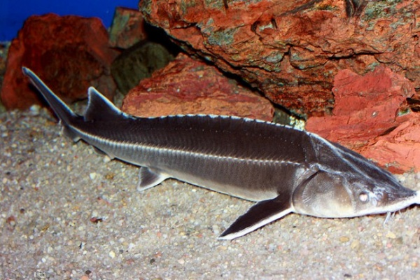 Воронежские браконьеры заплатят 1,6 млн рублей за массовый вылов рыбы