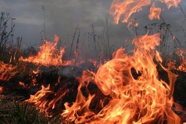 В последний день лета в Воронежской области произошло 13 природных пожаров