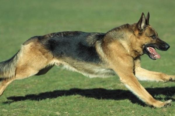 Собака Альфа показала воронежским школьникам, где лежат наркотики