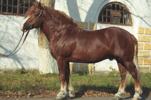 Цыган под покровом ночи увел с Хреновского конезавода чистокровного коня