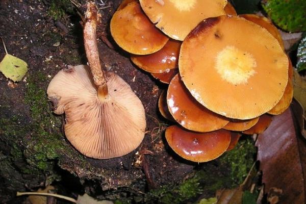НОВЫЕ ПОДРОБНОСТИ: Наурок труда грибы принесла учительница