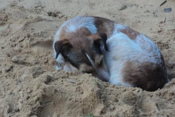 В воронежских школах отметят Всемирный день защиты животных