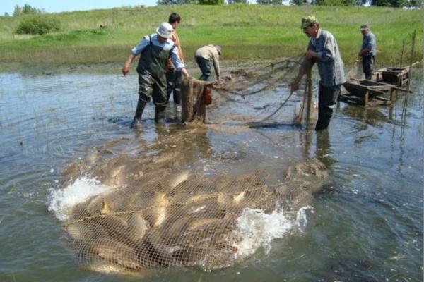 Как сделать озеро для разведения рыбы