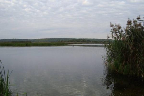 Воронежцам не нужны пруды за деньги