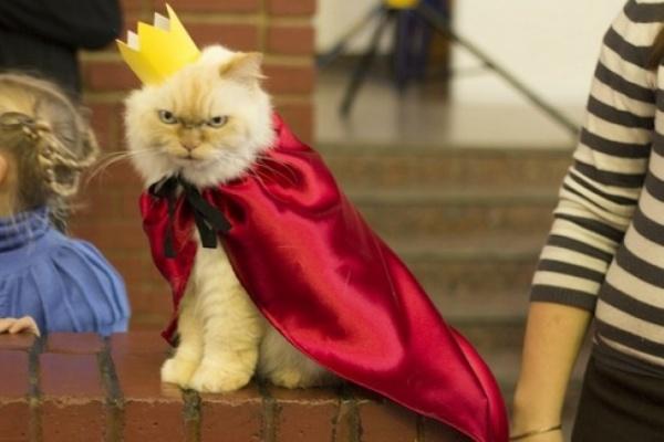 В Воронеже выбрали самого толстого кота и самого шустрого хорька