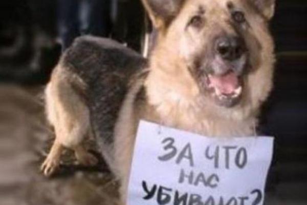 Воронежцы обеспокоены массовой травлей собак