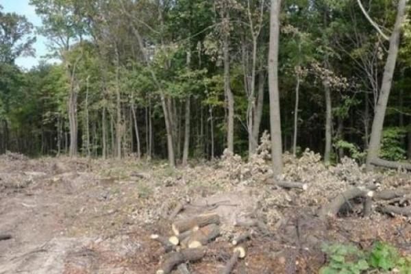 Экологи требуют 14 млн рублей за 400 дубов