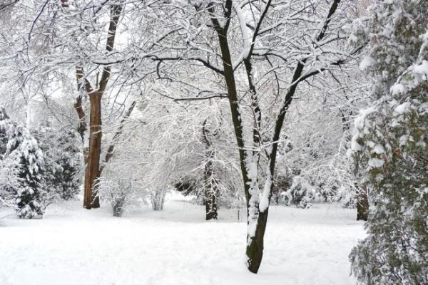Морозы придут в Воронеж на следующей неделе