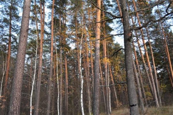Управлять лесным хозяйством Воронежской области будет новый руководитель