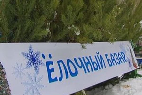 В Воронеже открылись елочные базары