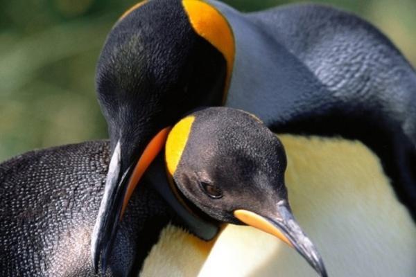 До океанариума воронежского сити-парка «Град» никак не доедут пингвины