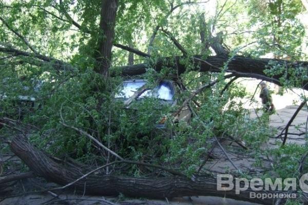 В Воронеже ураган повалил деревья на 15 машин и выбил в домах стёкла