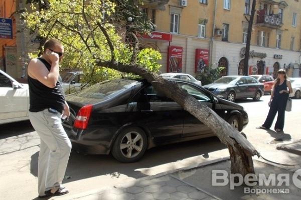 В центре Воронежа дерево рухнуло на иномарку