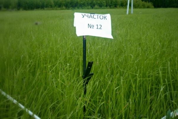 Земельное законодательство в Воронежской области  уже изменилось