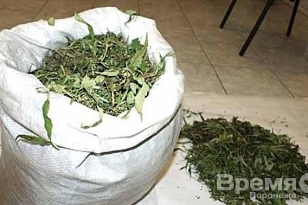 Воронежец выращивал коноплю на заброшенном поле