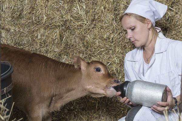 Поголовье коров на фермах воронежского «Молвеста» превысило 23 тысячи