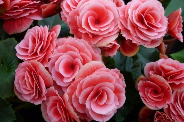 Воронежские власти сэкономили на цветниках 4 млн рублей