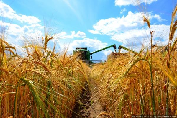 Воронежские аграрии завершают год «в шоколаде»
