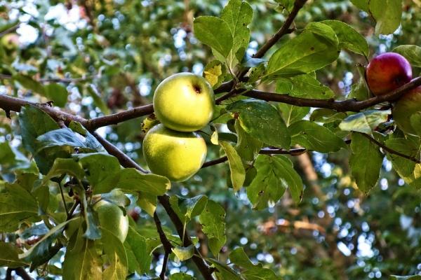 Фигурант дела о захвате воронежского яблоневого сада вышел из СИЗО