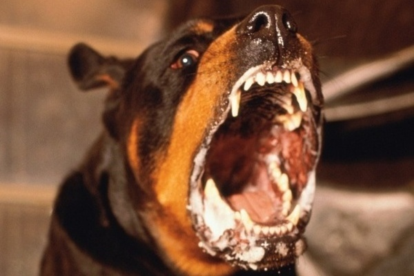 Бешенство животных распространяется по Воронежской области