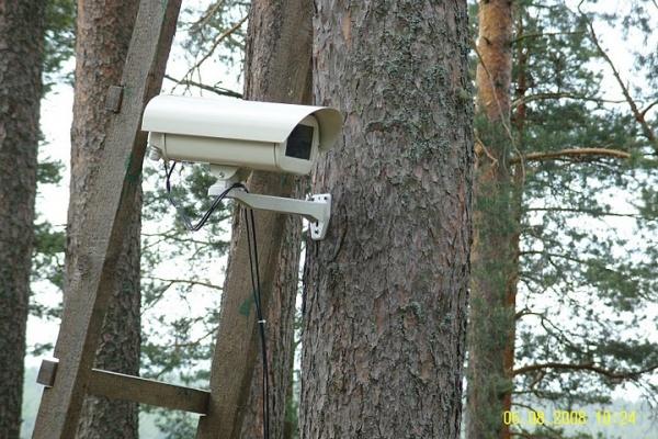 Воронежский губернатор распорядился ввести круглосуточное видеонаблюдение в парках