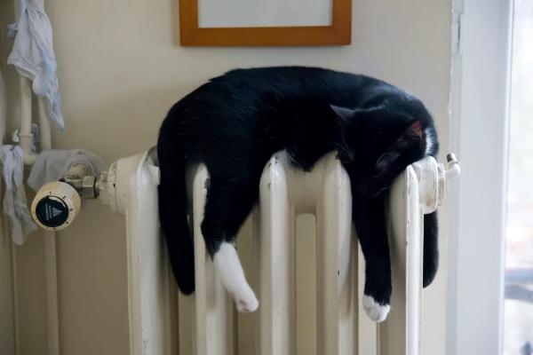 В Воронеже самая низкая плата за отопление составила 86 рублей в месяц