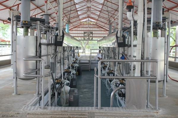 Власти России и Израиля рассмотрят участие Воронежа в молочном проекте