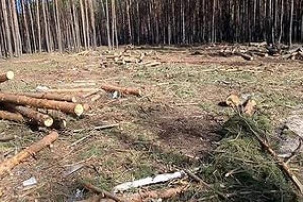 Глава городского поселения Воронежской области попал под следствие