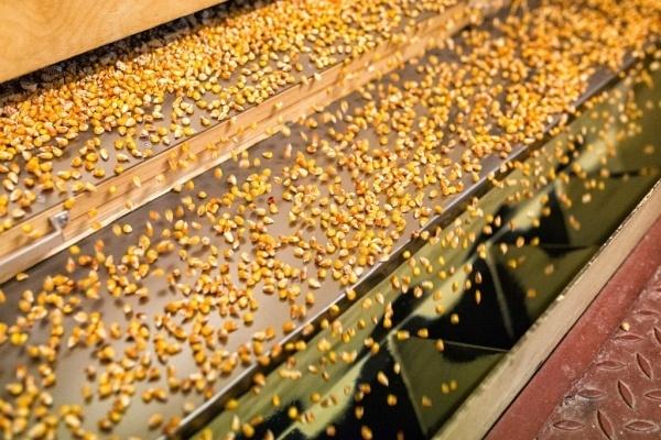 «Монсанто» планирует утроить производство семян гибридов кукурузы в России в 2016 году