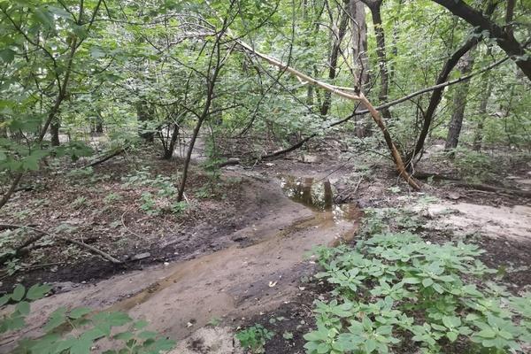 Департамент экологии заинтересовался зловонной водой в границах воронежской дубравы