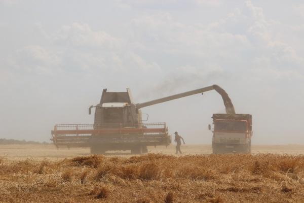 Воронежская область за полгода экспортировала сельхозтовары на 302 млн долларов
