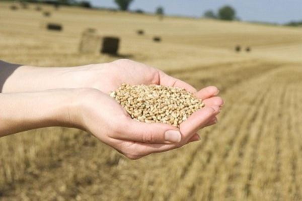 Воронежская область экспортировала свыше 3 тыс. тонн зерна