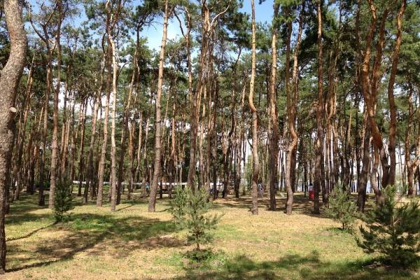 Зеленый пояс вокруг Воронежа подрос до 15,5 тыс. га