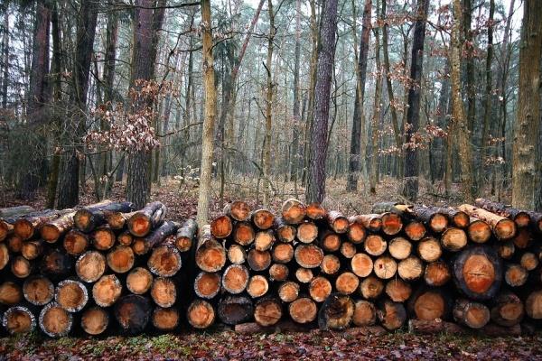 В Воронежской области за год выявили сотню экологических преступлений