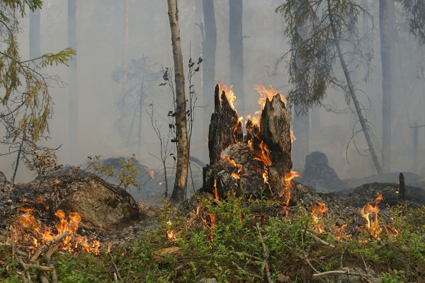Директор Воронежского заповедника назвал возможную причину возгорания 3 га леса