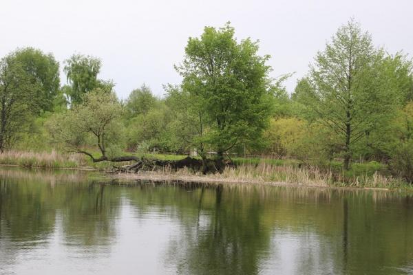 Воронежские власти задали границы для 32 памятников природы